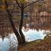 Őszi erdő Tó Sopron
