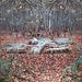 Emlékhely Sopron Erdő Ősz