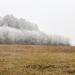 ködös zúzmarás táj