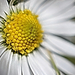 Album - Virágok - növények