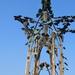Szekszárd, Szőlő-szobor
