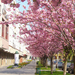 Szekszárd, Virágos utca