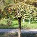Kaba, tiffany lámpa a parkban