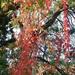 Szarvas, színes levelek