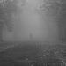 Gyűjtemény - Ködös képek