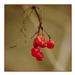Album - Flowers