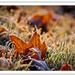 Zúzmarás reggel Sopronban 2011.11.13 (4)