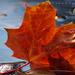 Október háttérkép - kisklau