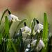 Tavaszváró - március (15)