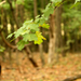 Erdőben...