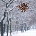 Termés a hóban