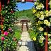 Rózsa kapu