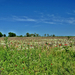 Elhanyagolt földterület