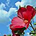Virágos ég