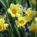 Tavasszal