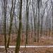 Album - Budakeszi vadaspark