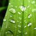 zöld szín