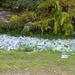 Műanyagpalack-hegy Zuglóban