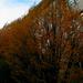 ősz a ház előtt
