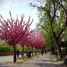 virágos sétány