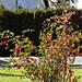 virágzó bokor