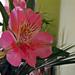 szülinapi virág