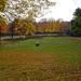 Sárga-zöld park