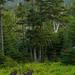 Album - Moose Spotting in Maine
