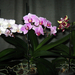 Orchideáim.
