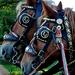 Domaszék lovasnap 006