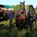 Domaszék lovasnap 038
