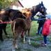 Domaszék lovasnap 072