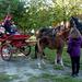 Domaszék lovasnap 076