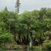 Víz a fák között