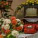 Virágos szoba