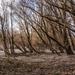 Megdőlt fák
