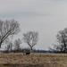 Kopár fák