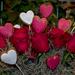 Szerelem rózsái
