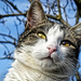 Macska a fán