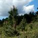 A soproni Dudlesz erdő 2.