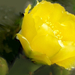 Legelső virága