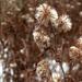 Elszáradt virágok