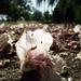 Halott virágok