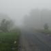 Nyári ködben 4