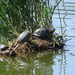 Teknősök szigete