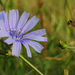 Útszéli virág