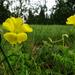 Sárgaszínben