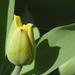 Virágnézet 1
