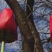 Virágnézet 2