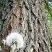 Fa tövében